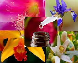 ALQUIMIA: Flores de Bach
